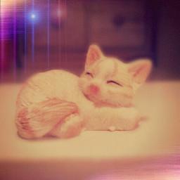 cute art cat cool animals