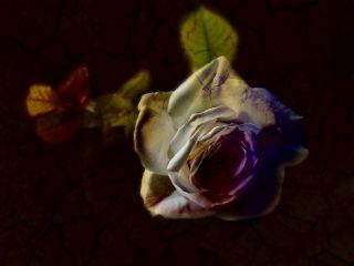 flower nature phoneart spring blur