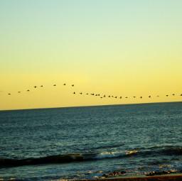 sunset seagulls beauty landscape