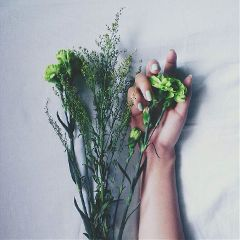 flower flowers green hand nail