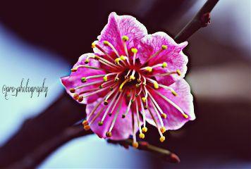 beautiful cute flower hdr love