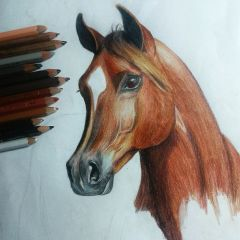 horse drawing pencil art colorful pets & animals