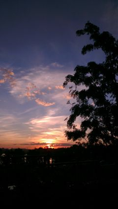 moscow nature sunset summer beautiful