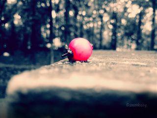 photography macro vintage fruit bokeh