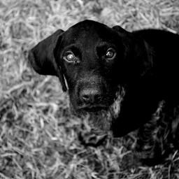 black & white cute pets & animals photography black