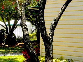 arbre lezard posé