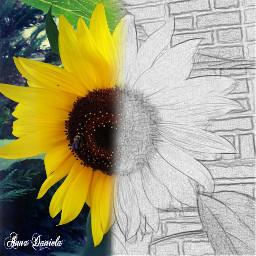 nature pencil art photography flower