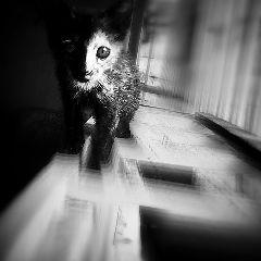 cats blackandwhite photography mansbestfriend petsandanimals