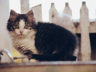 cat cute love petsandanimals photography