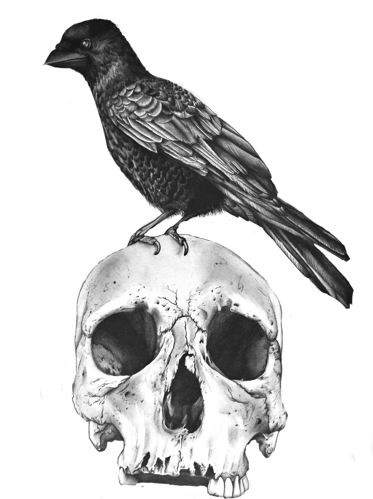 Рожицы, картинки с воронами нарисованные