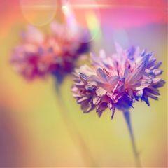 flower purple flores morado photography