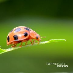 macro petsandanimals nature photography