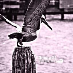 bird photography freetoedit