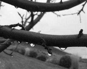 blackandwhite rain water nature tree