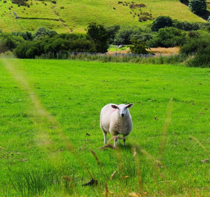 #wapgreen #Wicklow Way #Ireland