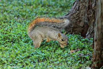 animal grass tree guillory squirrel
